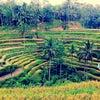 Foto Tegallalang Rice Terraces, Gianyar