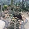 Foto Taman Kaktus Bedugul, Tabanan
