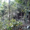 Foto Pondok Wisata Ketambe,