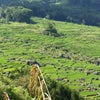 Foto Tinnimbayo - Mount Sesean,