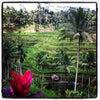 Foto Teras Padi Cafe, Ubud