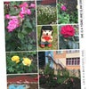 Фото Детский сад № 272