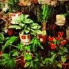 Фото Майские цветы