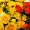 Фото Соцветие