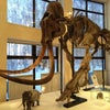Фото Музей природы и человека