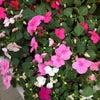 Фото Нескучный сад
