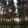 Фото Солнечный