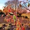 Kidlington, Photo added:  Monday, January 13, 2014 8:06 AM