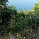 cagla-durak-126061873