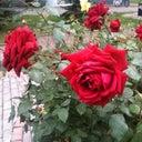 alesya-9812979