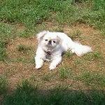 Photo taken at Panda Express by Tonia H. on 8/4/2012