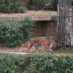 Photo taken at Great Cats at The National Zoo by Matthew W. on 11/13/2011