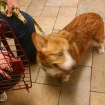 Photo taken at Chelmsford Animal Hospital by Beth A. on 8/22/2014