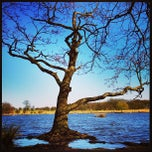 Photo taken at Richmond Park by Philip A. on 4/20/2013
