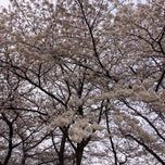 Photo taken at 塚山公園 by ihase on 3/29/2015