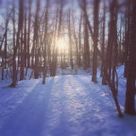 Photo taken at Mill Woods Dog Park by Andy H. on 2/1/2015
