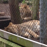 Photo taken at The Lions by Clover on 4/10/2014