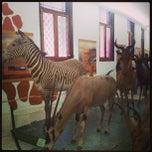 Photo taken at Museo de Ciencias Naturales de Caracas by Yaki M. on 6/23/2013