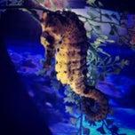 Photo taken at Maui Ocean Center, The Hawaiian Aquarium by Trisha Kehaulani W. on 7/21/2013