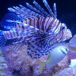 Photo taken at The Living Planet Aquarium by Mike N. on 4/26/2013