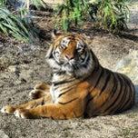 Photo taken at Dublin Zoo by Natália C. on 3/5/2013