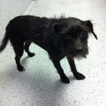 Photo taken at VCA Westside Animal Hospital by Corrie E. on 2/14/2013