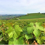 Photo taken at Vigna Dolcetto-Garitta by Gianluca M. on 6/29/2013