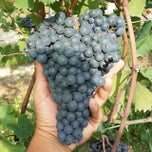 Photo taken at Vigna Dolcetto-Garitta by Cascina G. on 8/18/2014