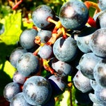 Photo taken at Vigna Dolcetto-Garitta by Cascina G. on 8/16/2014