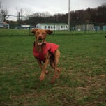 Photo taken at Normanskill Dog Park by Dylan B. on 4/30/2014