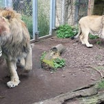 Photo taken at The Lions by Hallgrímur L. on 4/19/2014