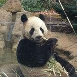 Photo taken at 上野動物園 (Ueno Zoo) by Machiko on 1/23/2013
