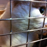 Photo taken at Natick Animal Hospital by Becca D. on 2/8/2013