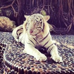 Photo taken at The Million Years Stone Park & Pattaya Crocodile Farm by Mishka V. on 2/5/2013