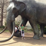 Photo taken at Museum of Nature & Science by Sire on 3/17/2013