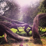 Photo taken at Golden Gate Park by Leslie W. on 6/2/2013
