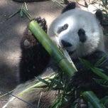Photo taken at Giant Panda Research Station by Derek B. on 4/13/2015