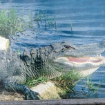 Photo taken at Big Cypress Oasis Visitor Center by Michael J on 12/29/2012