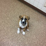 Photo taken at Arizona Avenue Animal Clinic by Stephanie R. on 10/17/2013