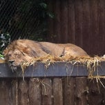 Photo taken at The Lions by Kate F. on 5/30/2014