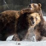 Photo taken at Bronx Zoo by Bronx Zoo on 12/16/2014