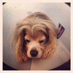 Photo taken at Park Animal Hospital by Porfirio L. on 11/19/2013