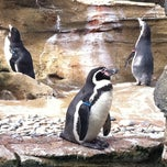 Photo taken at Penguin Exhibit by Chelle L. on 3/11/2011