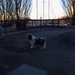 Photo taken at Sirius Dog Run, Kowsky Plaza by Sally Y. on 12/7/2013