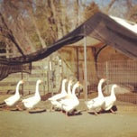 Photo taken at River Birch Animal Farm and Gift Shop by Molly L. on 3/9/2013
