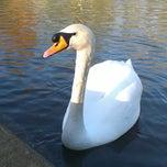 Photo taken at Abington Park Lake by Lord Tony on 12/24/2014