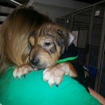 Photo taken at Texas Humane Heroes by Cyndi S. on 4/4/2013