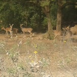 Photo taken at Shamirpet Deer Park by Harini on 1/14/2014