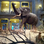 Foto tirada no(a) National Museum of Natural History por Andrew M. em 2/16/2013