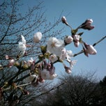 Photo taken at 長命館公園 by Nick C. on 4/14/2013